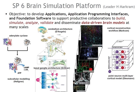 Brain Simulation Platform