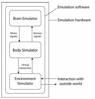 Brain emulation and environment