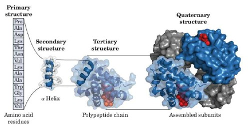 Proteins folding structures