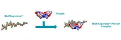 BioChaperone and Proteins