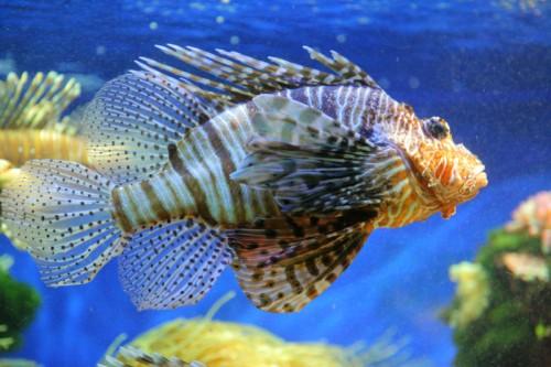 Aquarium du Musee Oceanographique de Monaco - 3200 ISO