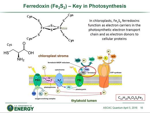 Ferrefoxin