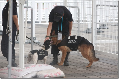 Shanghai Expo Bomb Dogs (2)