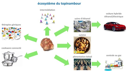 Ecosysteme topinambour