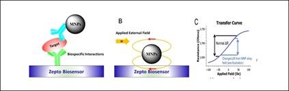 Magnetoresistance biomarkers Zepto