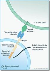 chimeric-antigen-receptor