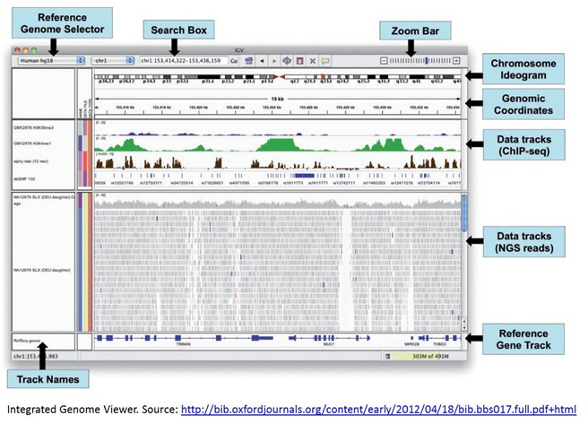Integrated Genomic Viewer screen map chromosome