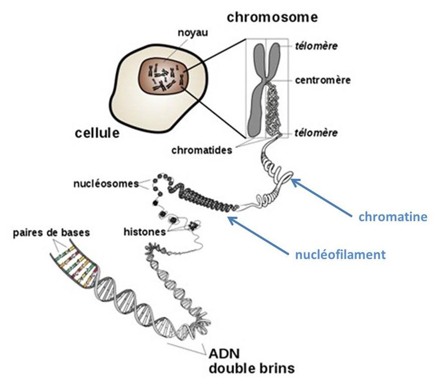 y datation chromosomique Alex et Piper Hook up scène