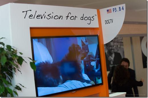DogTV (2)